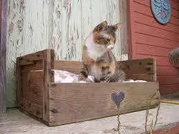 cama mascota cajas
